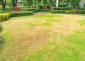 Repair Dead Grass